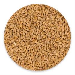 Солод «Wheat» Bestmalz, 1 кг