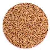 Солод «Wheat Munich» Castle, 1 кг