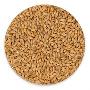 Солод пшеничный (Wheat malt, Курский солод), 1 кг