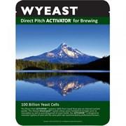 Жидкие дрожжи 1056 – American Ale, Wyeast
