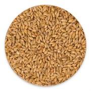 Солод пшеничный (BEST WHEAT MALT, Bestmalz), 50кг