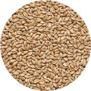 Пшеничный Солод Wheat malt (Курский солод), 50 кг